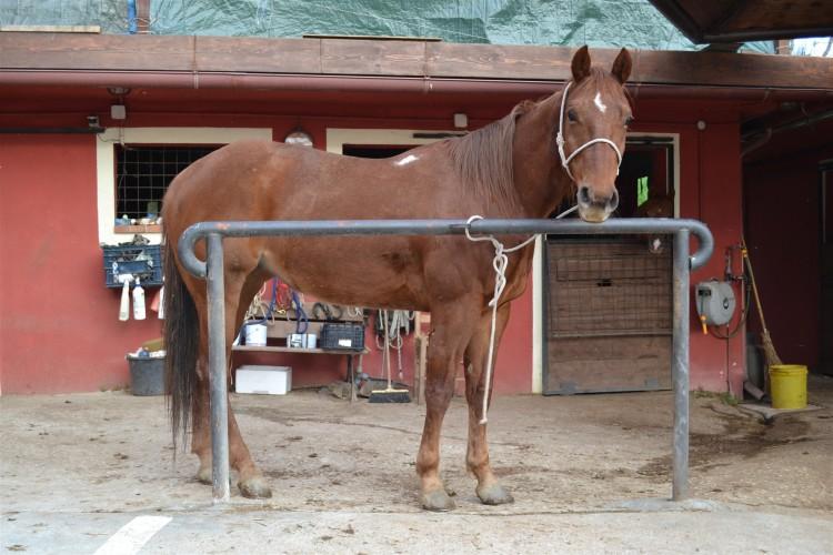 Cavallo - Pizzeria Il Ranch