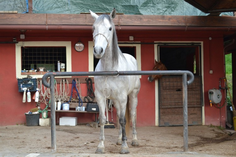 Secondo cavallo - Pizzeria Il Ranch