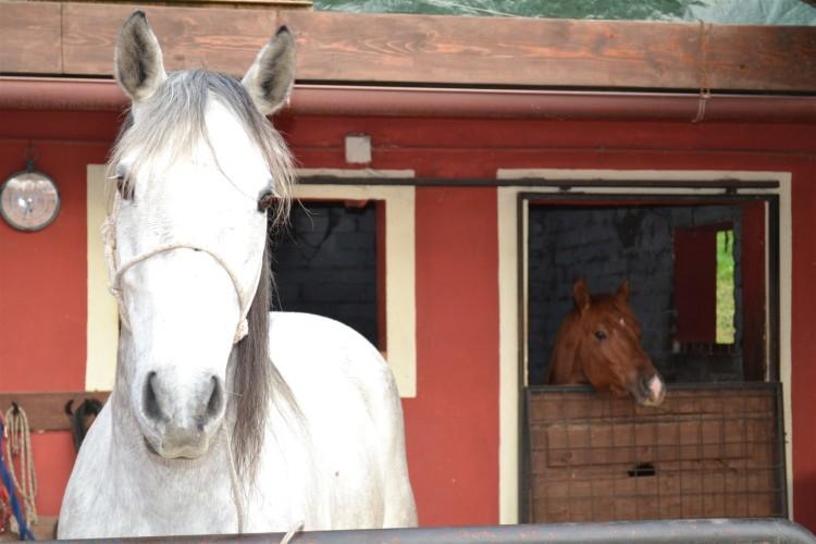 Sempre il secondo cavallo - Pizzeria Il Ranch
