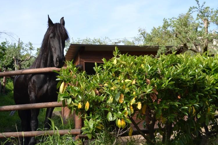 Terzo Cavallo - Pizzeria Il Ranch